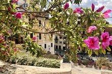 Piazza di Spagna Natale di Roma 2021 azalee capitoline Blumen auf der Spanischen Treppe